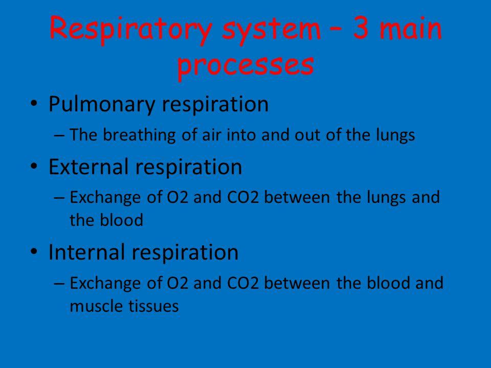 Respiratory system – 3 main processes