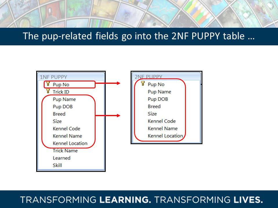 The pup-related fields go into the 2NF PUPPY table …