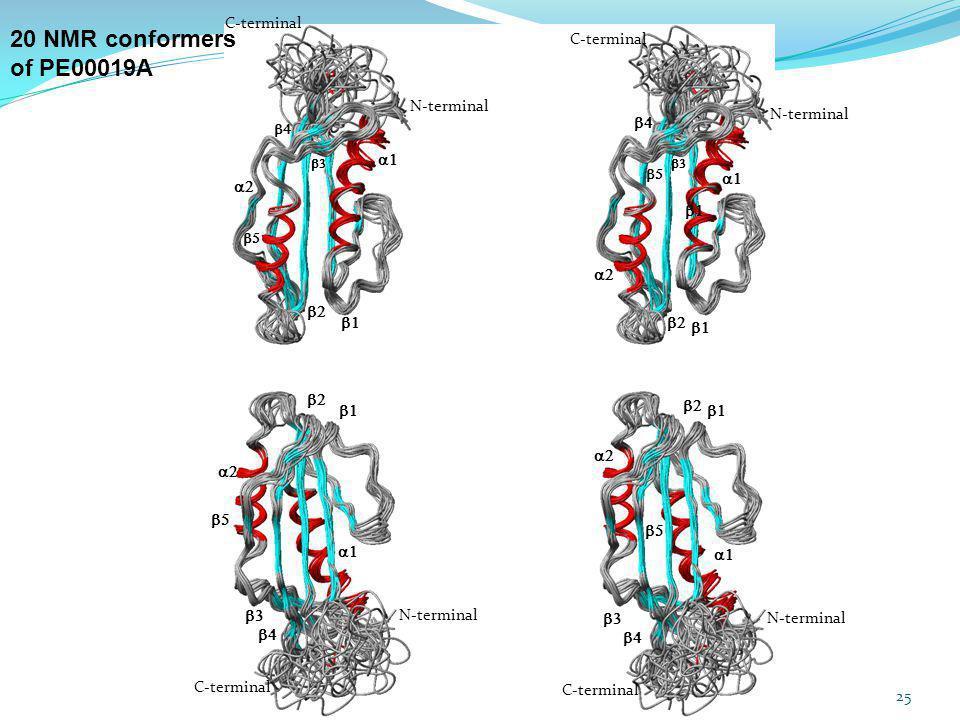 20 NMR conformers of PE00019A C-terminal C-terminal N-terminal