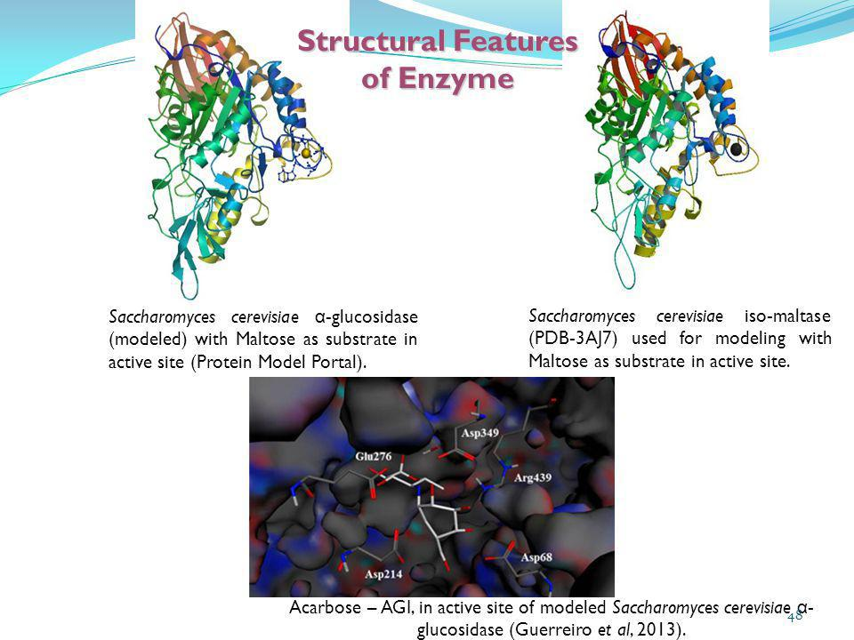 Structural Features of Enzyme