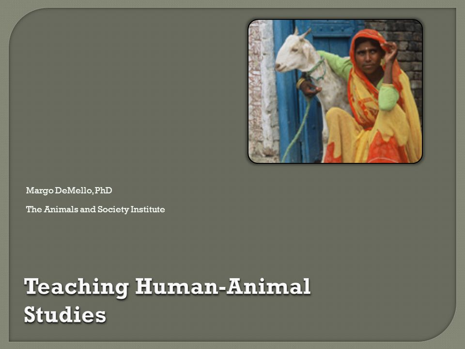 Teaching Human-Animal Studies