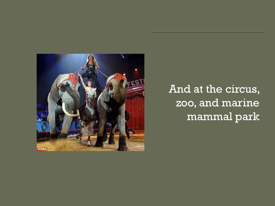 And at the circus, zoo, and marine mammal park