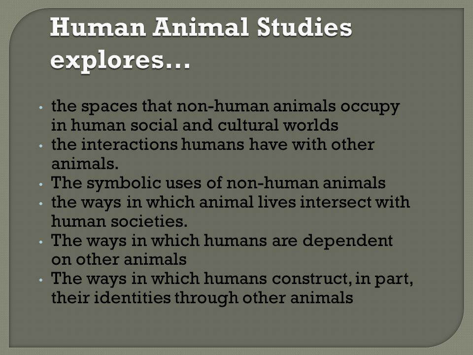 Human Animal Studies explores…