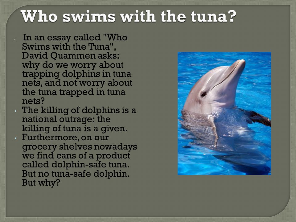 Who swims with the tuna