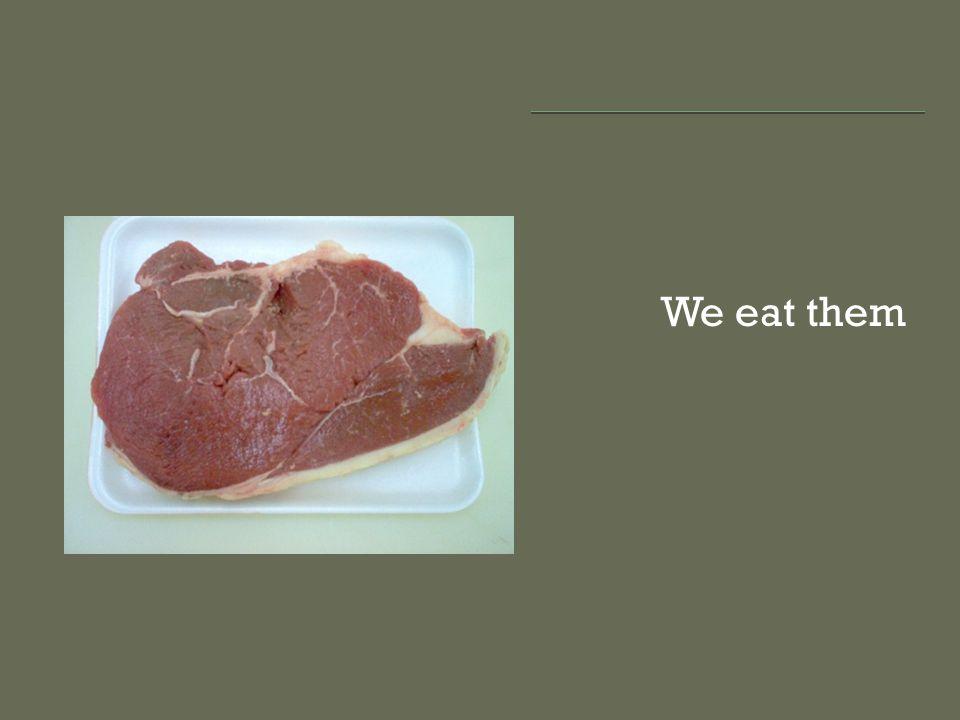 We eat them