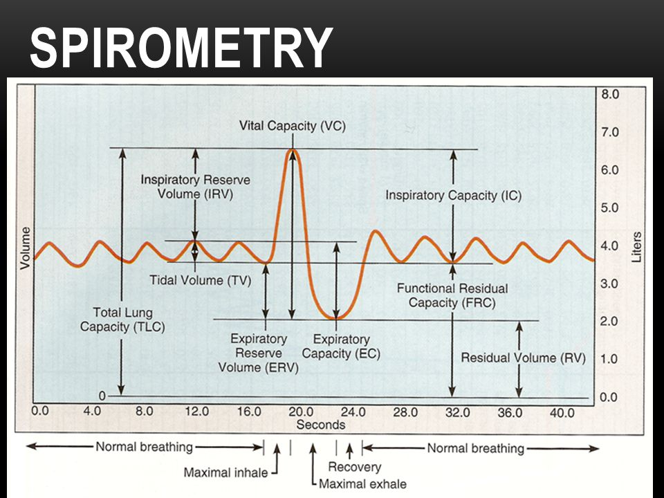 the respiratory system amp spirometry ppt video online