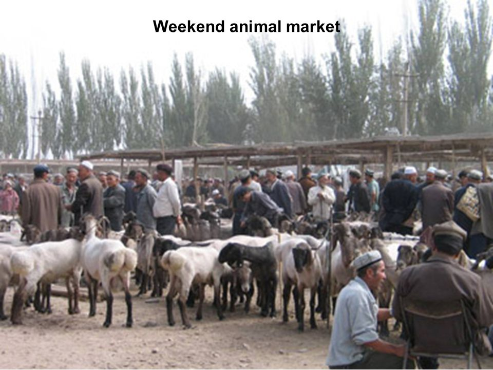 Weekend animal market