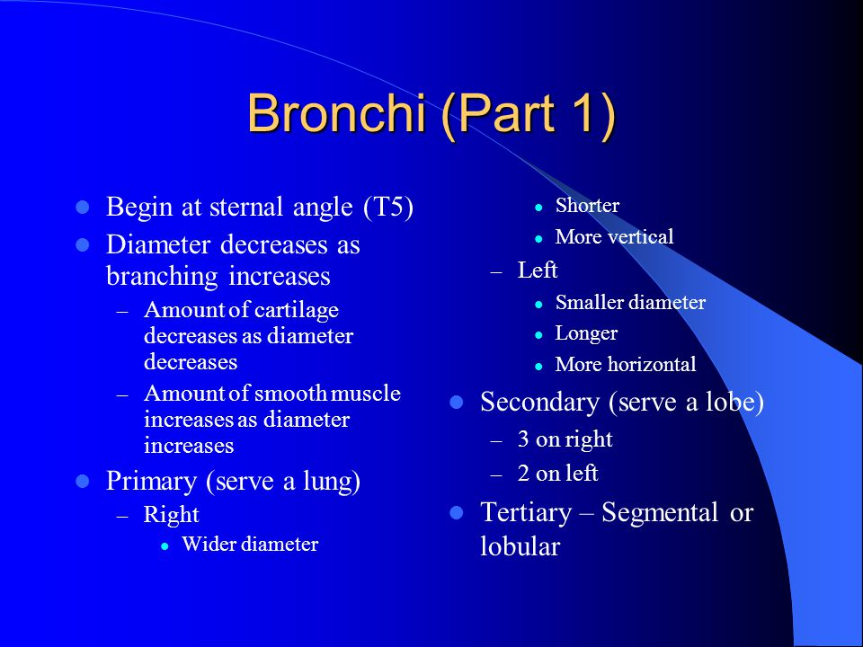 Bronchi (Part 1) Begin at sternal angle (T5)