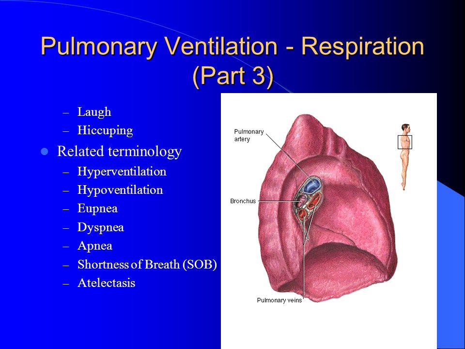 Pulmonary Ventilation - Respiration (Part 3)