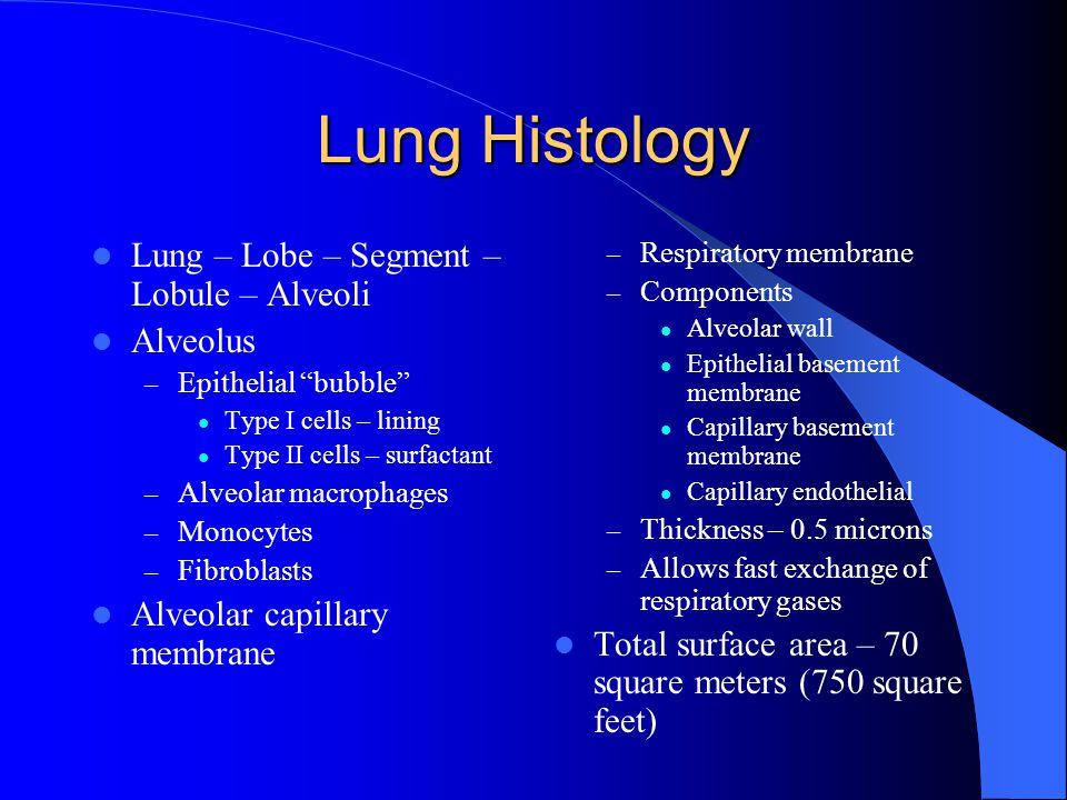 Lung Histology Lung – Lobe – Segment – Lobule – Alveoli Alveolus