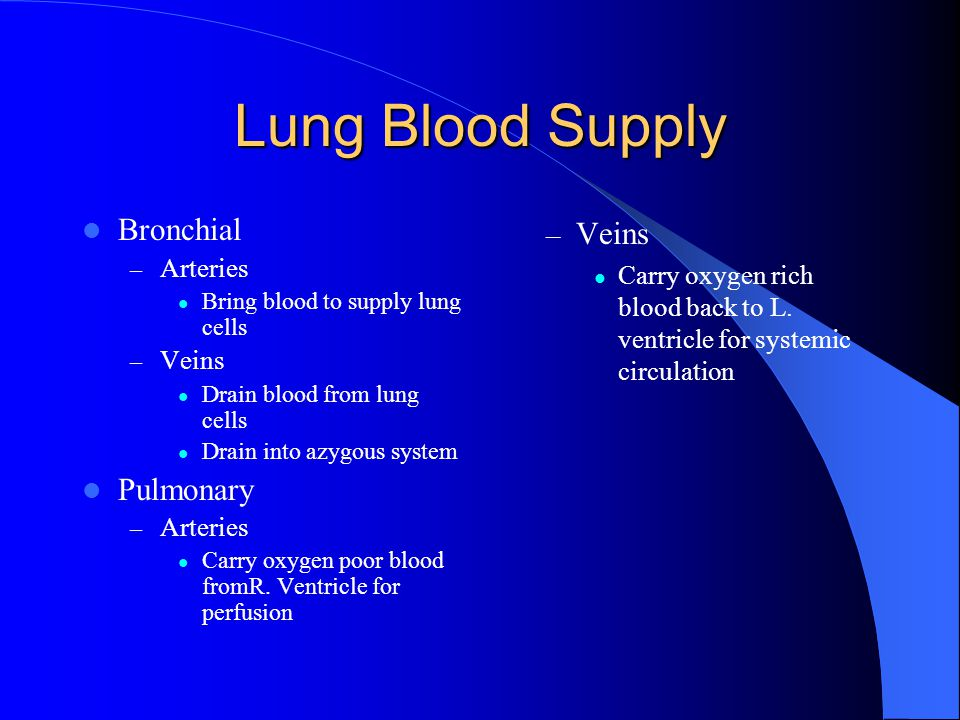 Lung Blood Supply Bronchial Pulmonary Veins Arteries