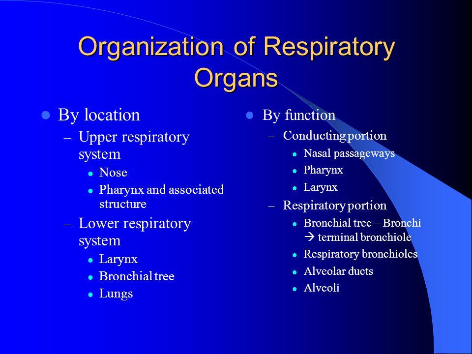 Organization of Respiratory Organs