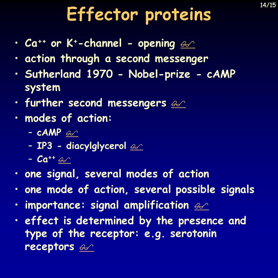 Effector proteins Ca++ or K+-channel - opening 