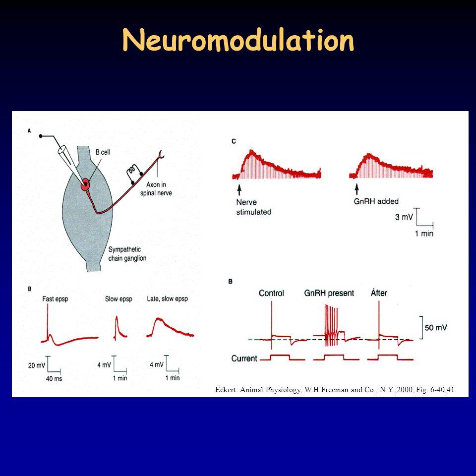 Neuromodulation Eckert: Animal Physiology, W.H.Freeman and Co., N.Y.,2000, Fig. 6-40,41.