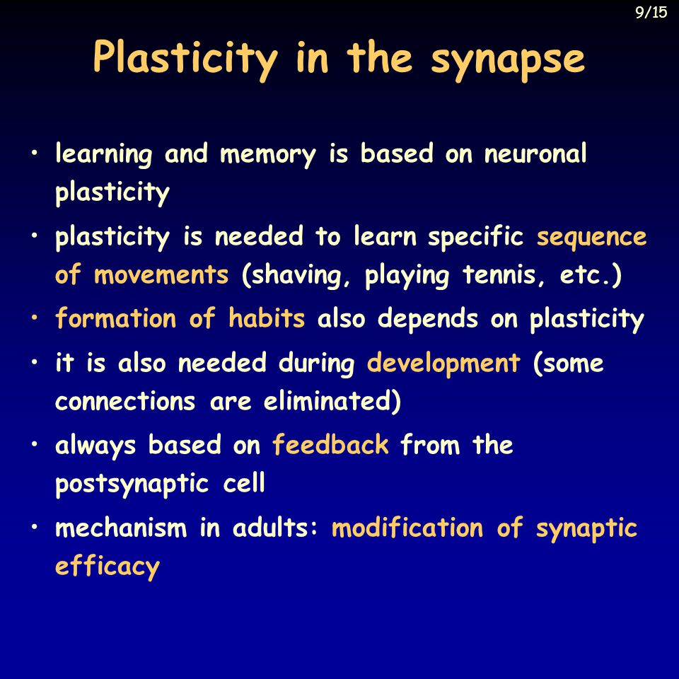 Plasticity in the synapse