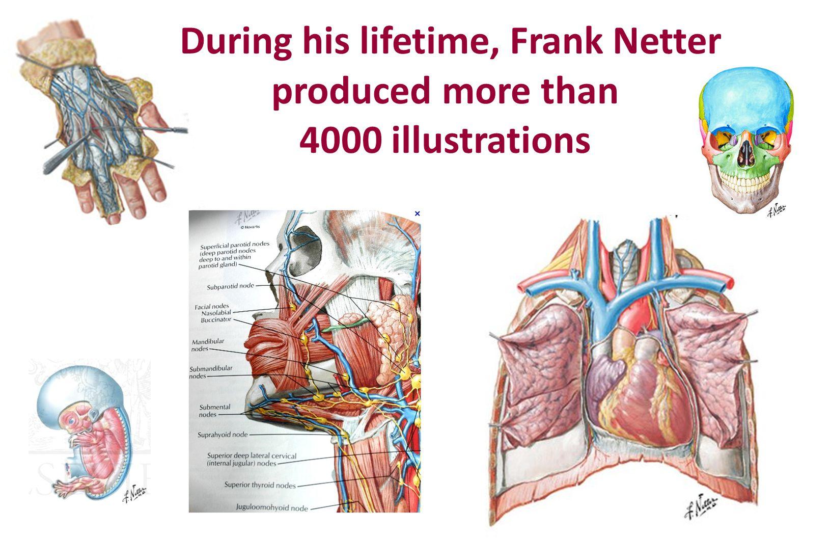 During his lifetime, Frank Netter