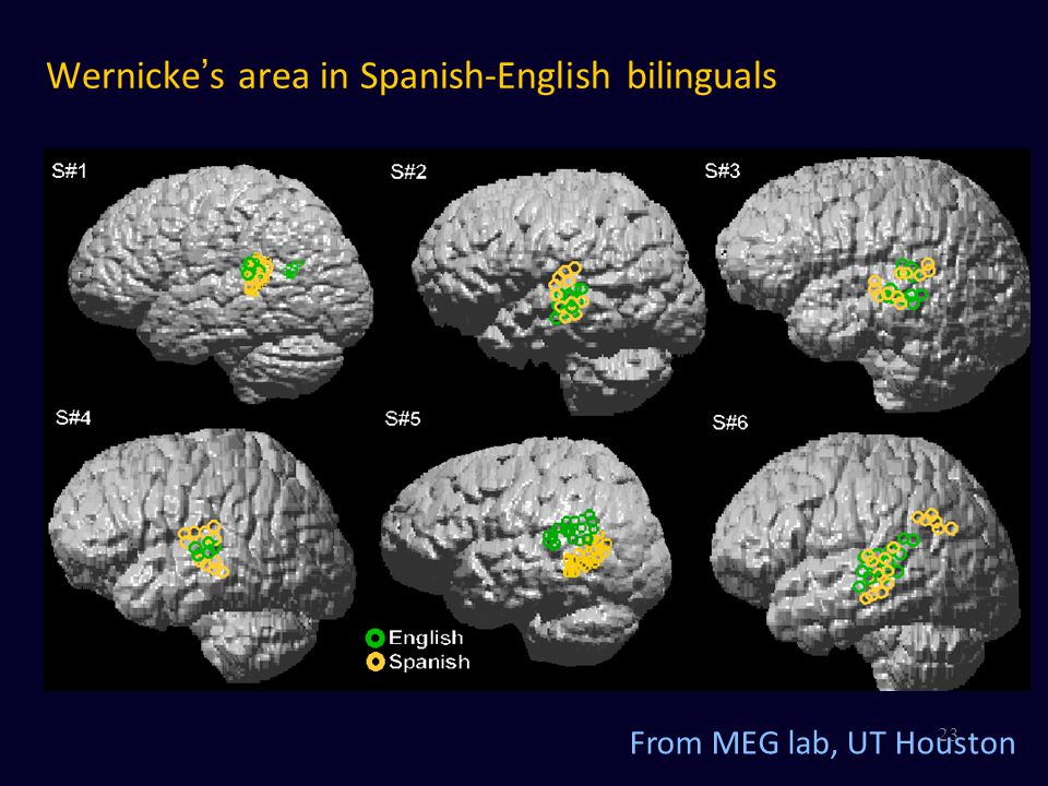 Wernicke's area in Spanish-English bilinguals