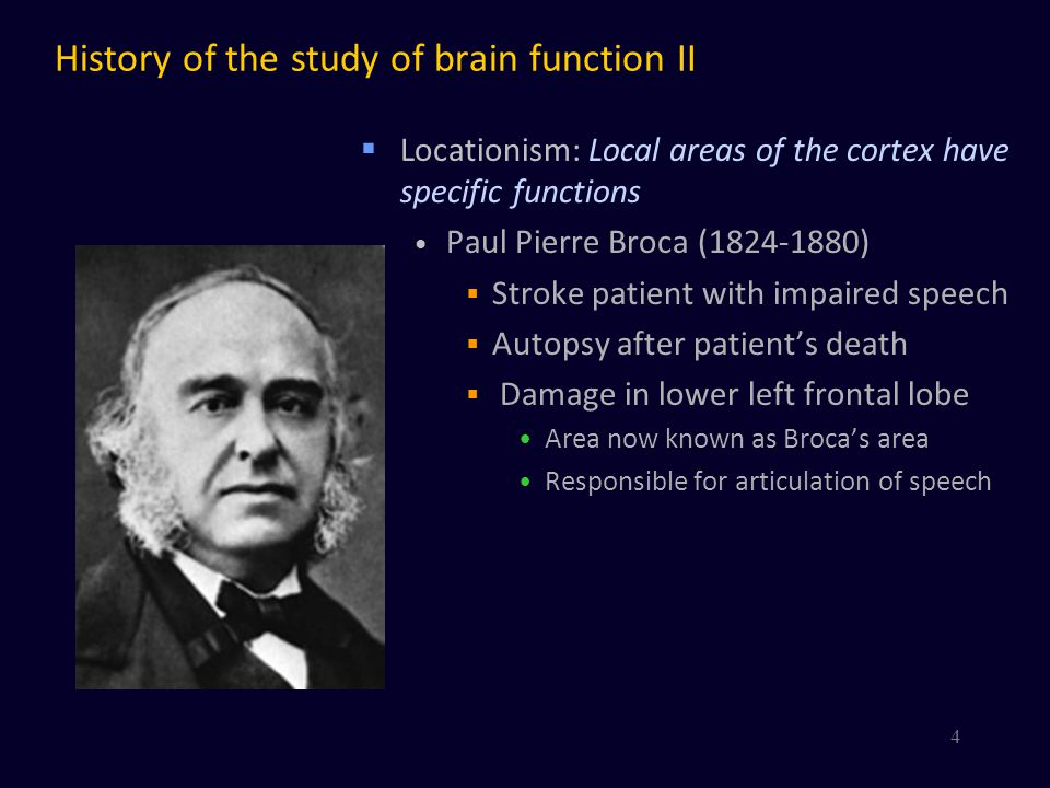 History of the study of brain function II