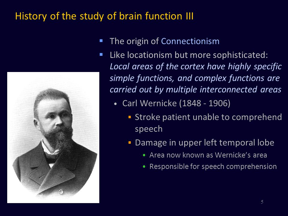 History of the study of brain function III