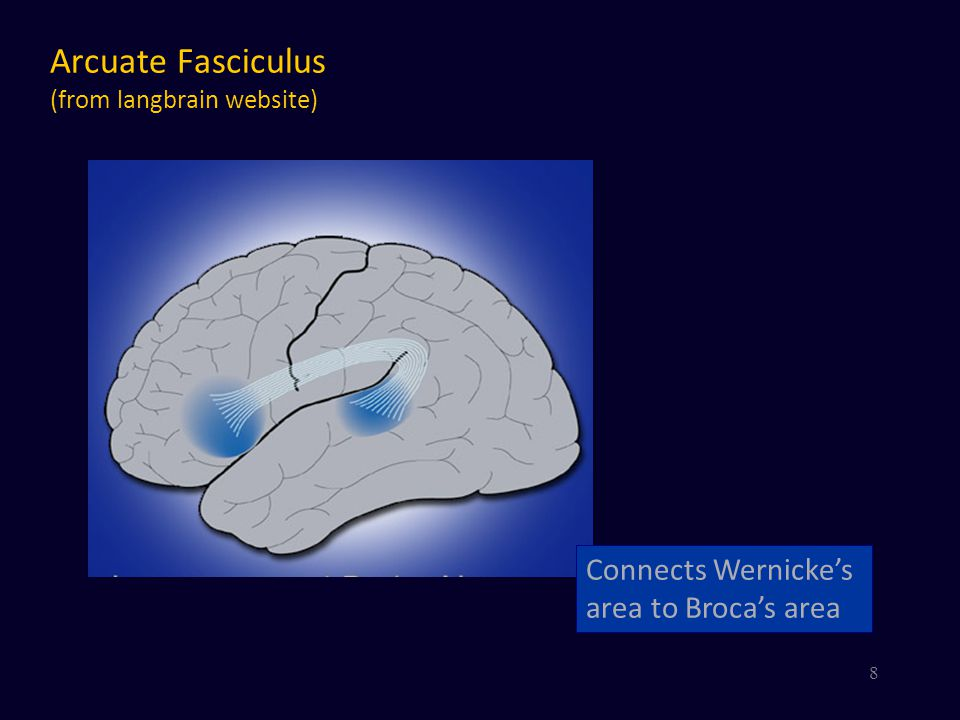 Arcuate Fasciculus (from langbrain website)