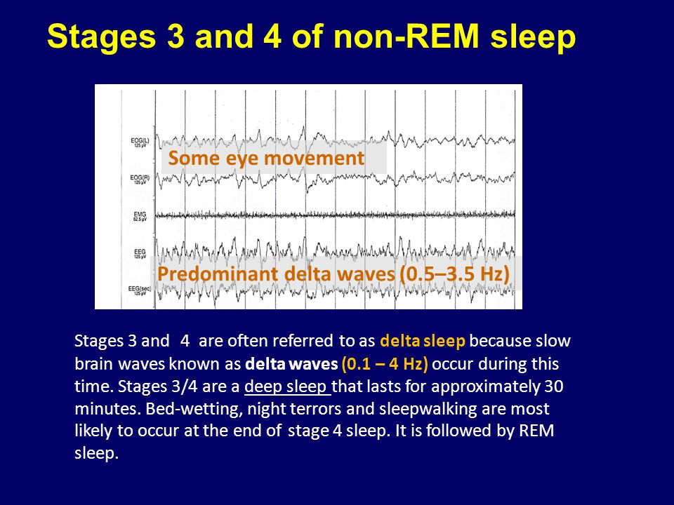 Stages 3 and 4 of non-REM sleep
