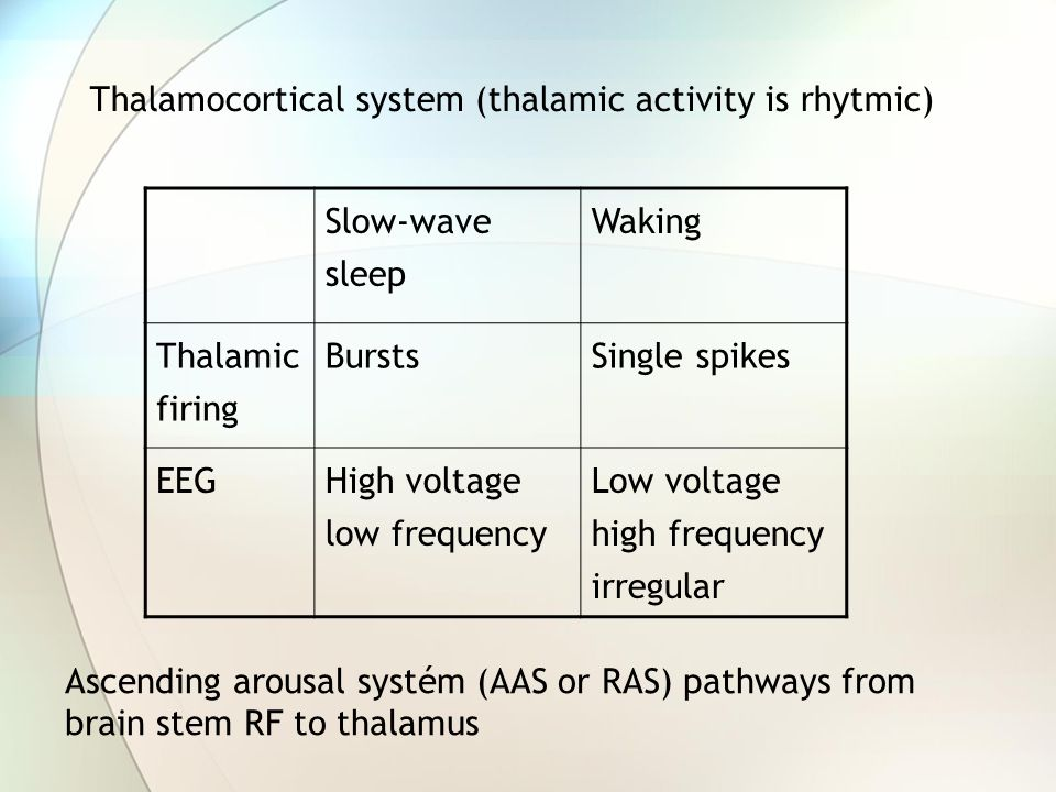 Thalamocortical system (thalamic activity is rhytmic) Slow-wave sleep
