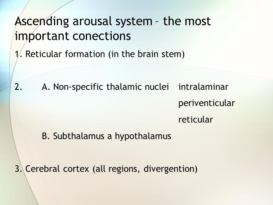 Ascending arousal system – the most important conections