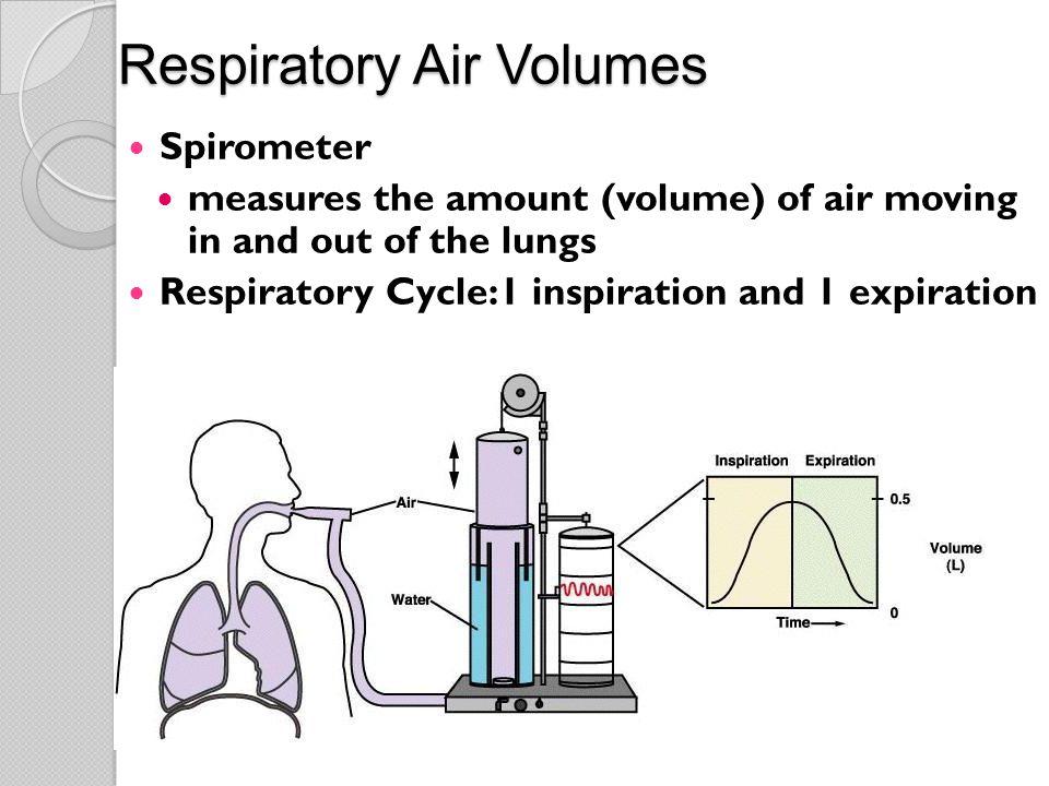 Respiratory Air Volumes