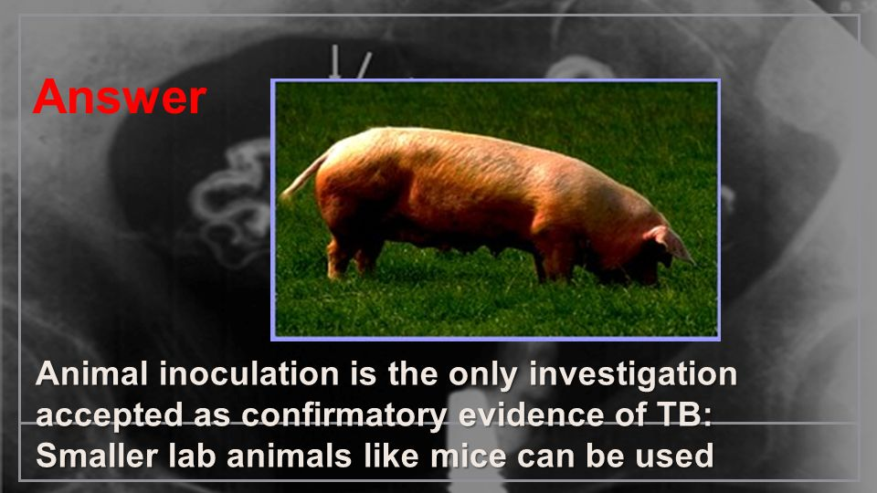 AnswerAnimal inoculation is the only investigation accepted as confirmatory evidence of TB: Smaller lab animals like mice can be used.