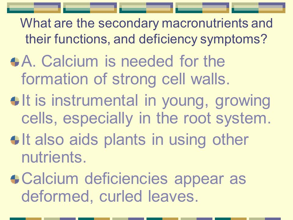 A. Calcium is needed for the formation of strong cell walls.