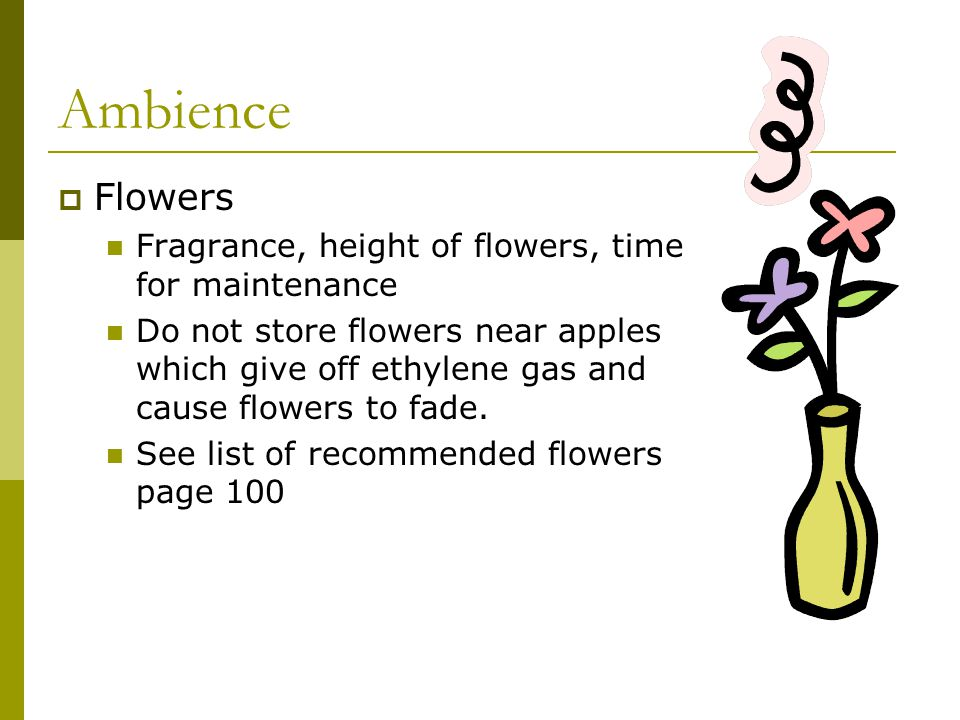 Ambience Flowers Fragrance, height of flowers, time for maintenance