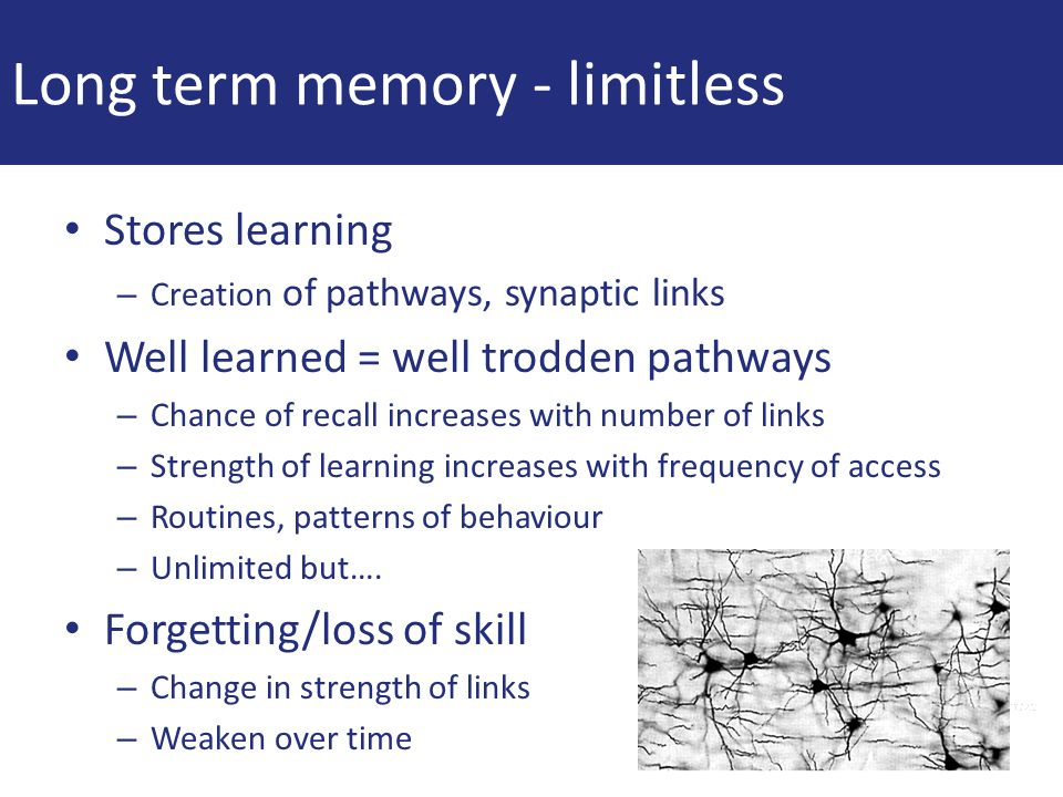 Long term memory - limitless