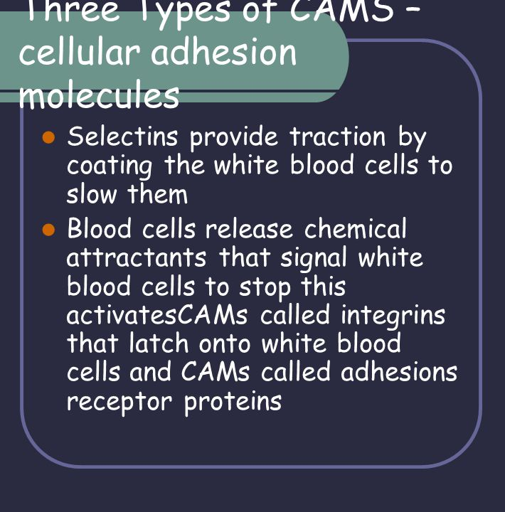 Three Types of CAMS – cellular adhesion molecules
