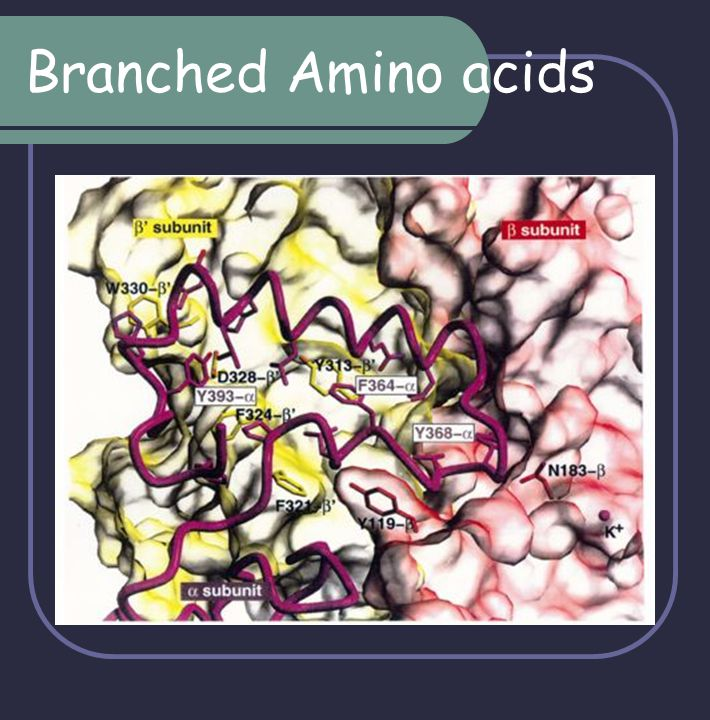 Branched Amino acids