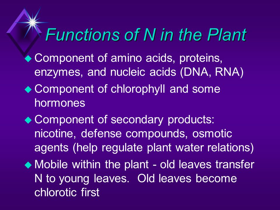 Functions of N in the Plant