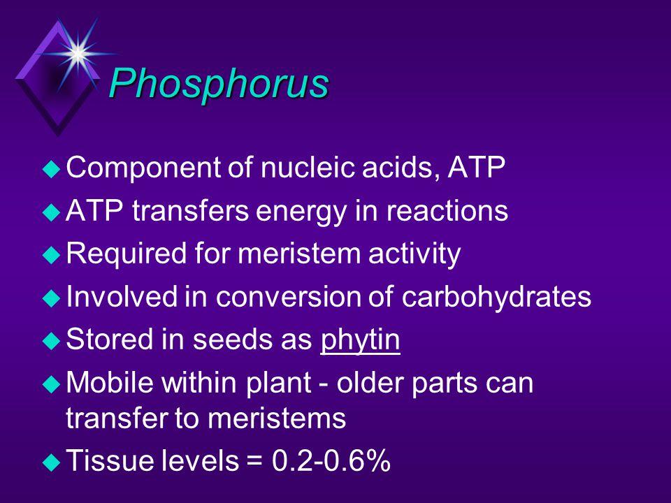 Phosphorus Component of nucleic acids, ATP