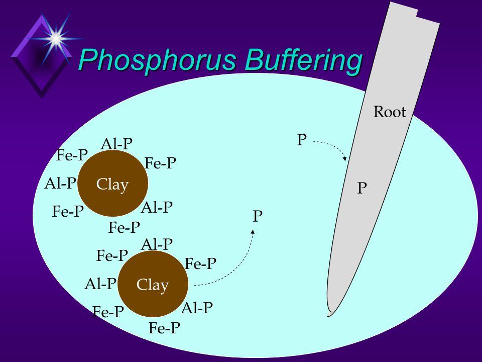 Phosphorus Buffering Soil Solution Root P Al-P Fe-P Clay P P P Al-P