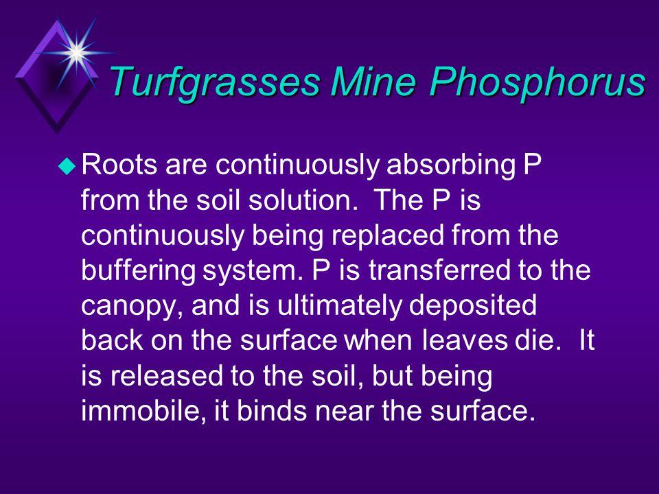 Turfgrasses Mine Phosphorus