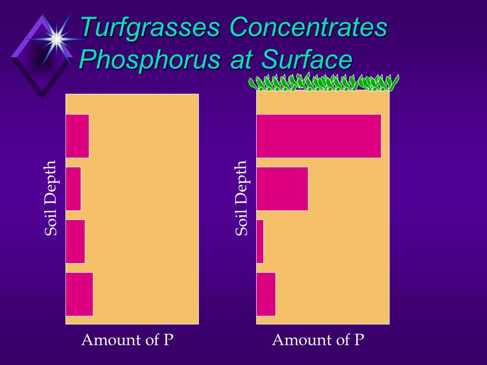 Turfgrasses Concentrates Phosphorus at Surface