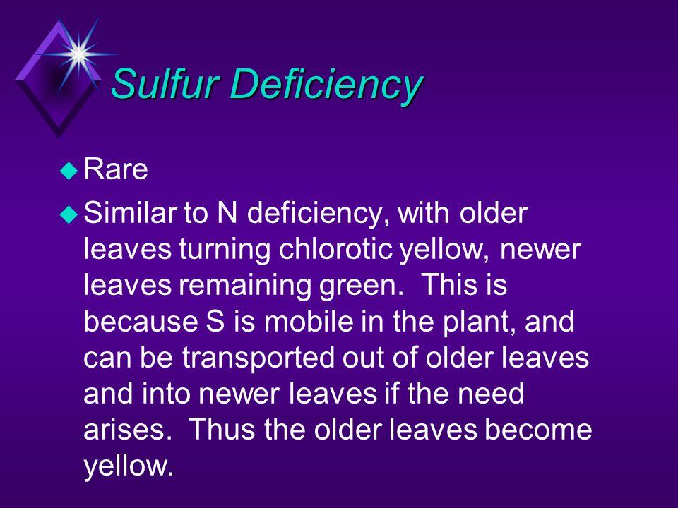 Sulfur Deficiency Rare