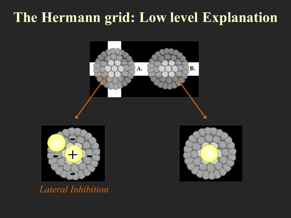 The Hermann grid: Low level Explanation