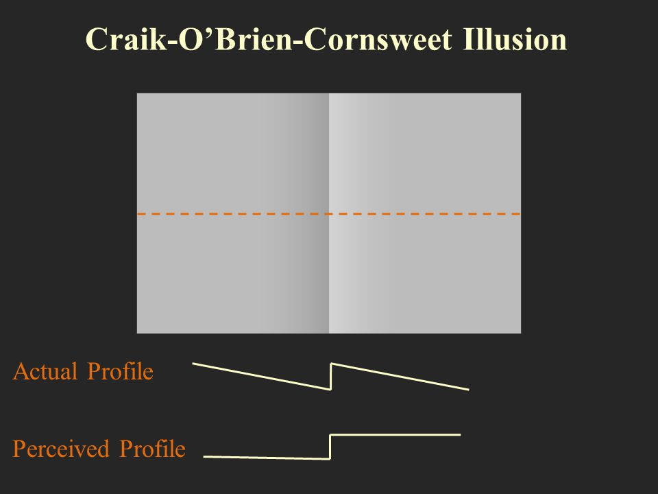 Craik-O'Brien-Cornsweet Illusion