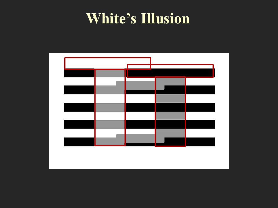 White's Illusion