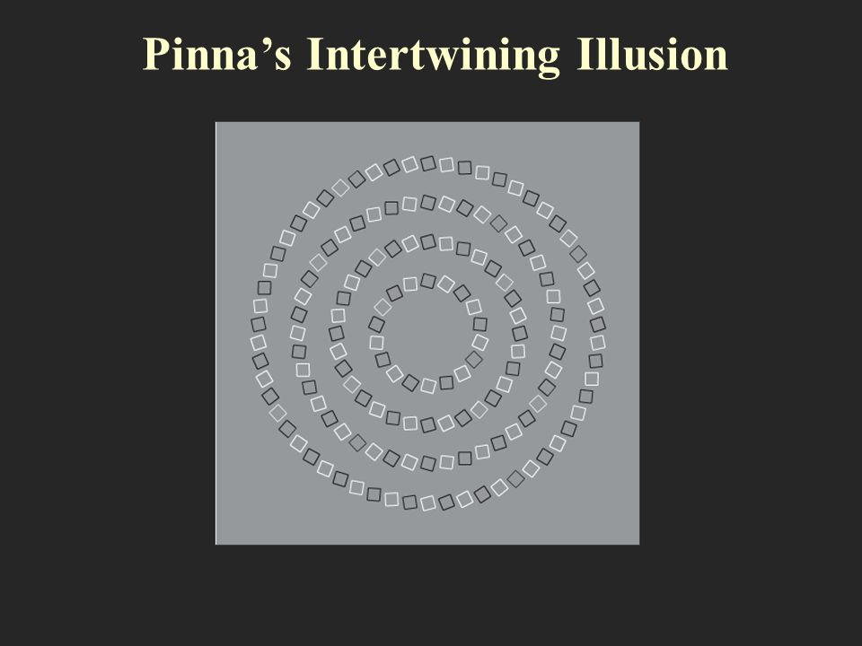 Pinna's Intertwining Illusion