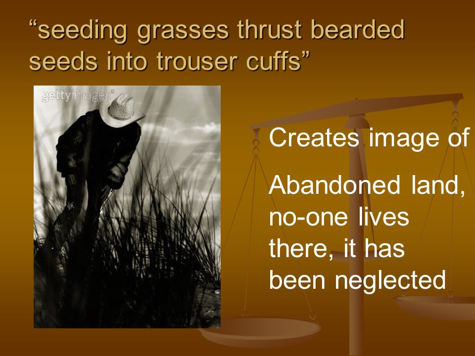 seeding grasses thrust bearded seeds into trouser cuffs