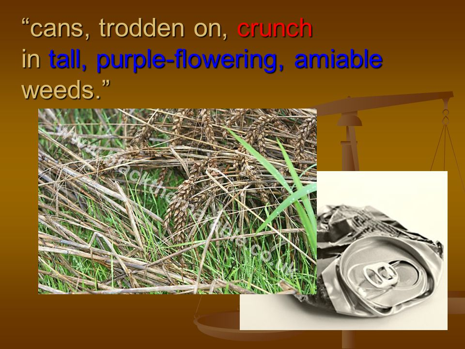 cans, trodden on, crunch in tall, purple-flowering, amiable weeds.