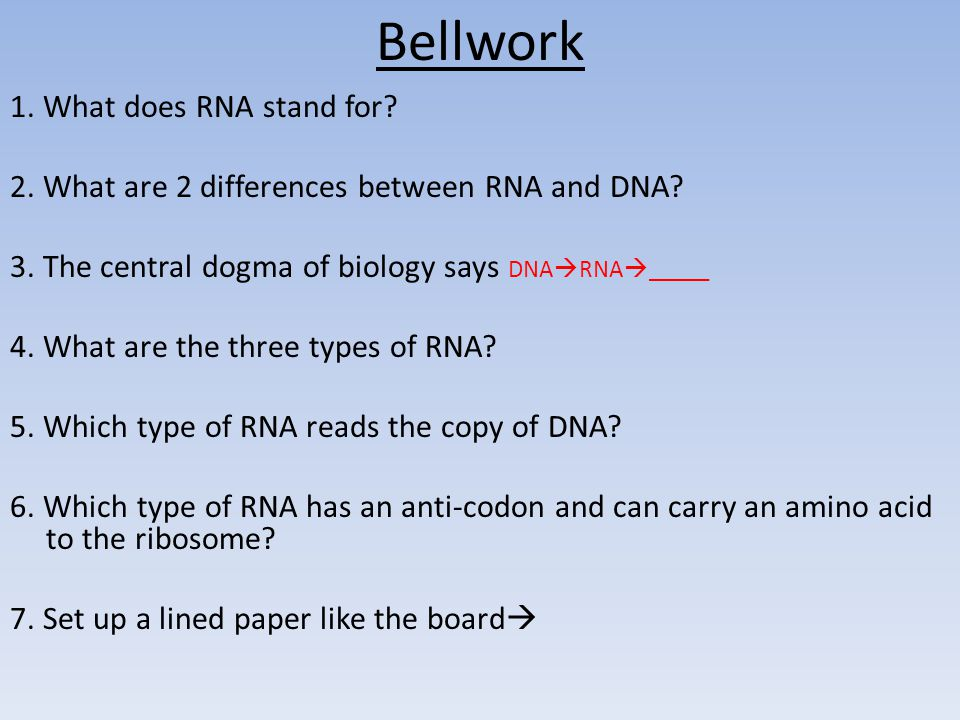 Bellwork 1. What does RNA stand for
