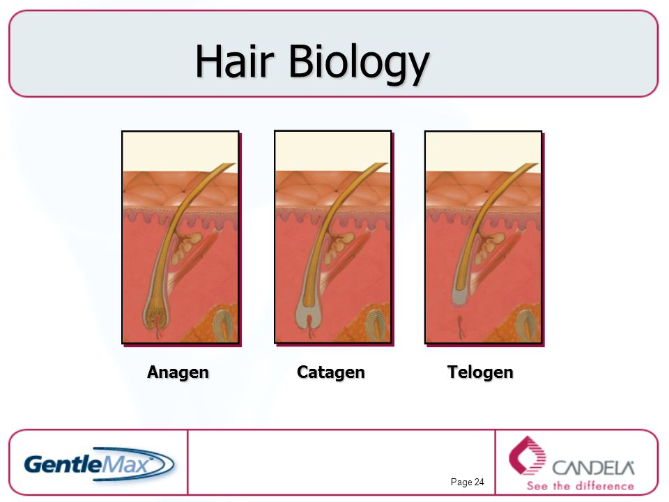 Hair Biology Anagen Catagen Telogen