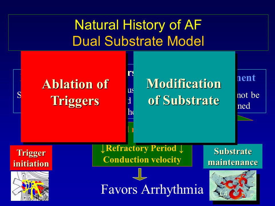 Natural History of AF Dual Substrate Model