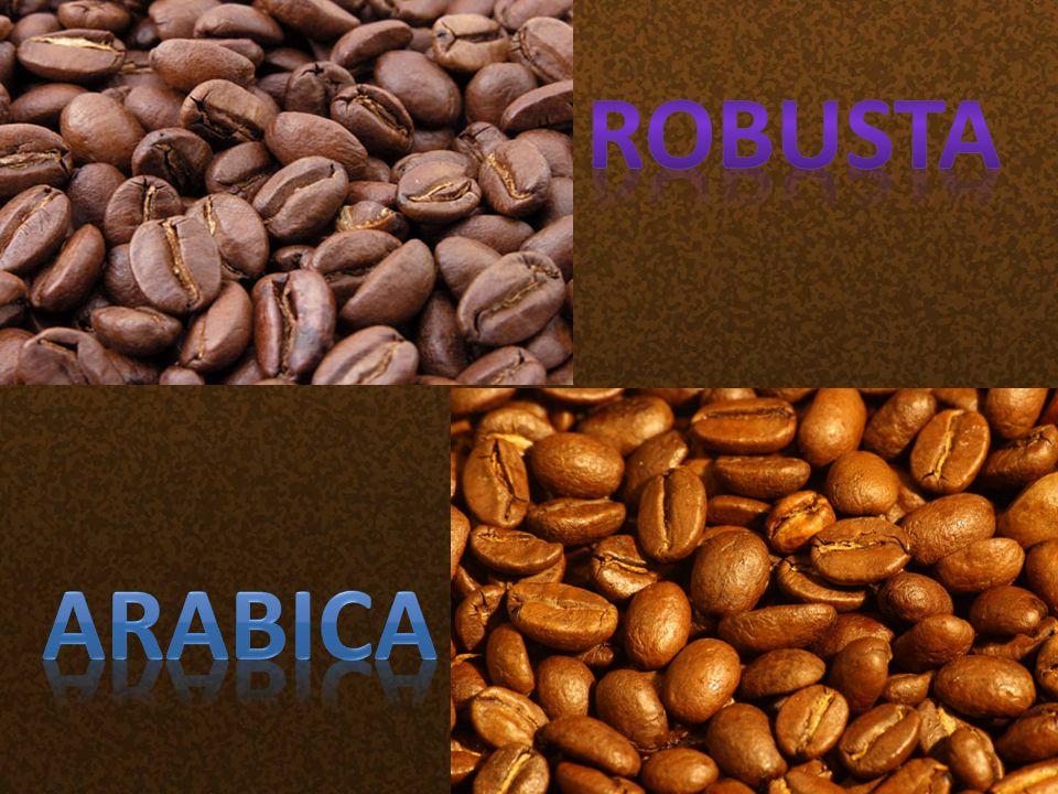 Robusta Arabica